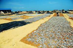 negombo fishing village