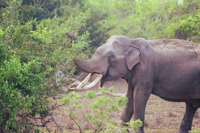 elephant yala national park