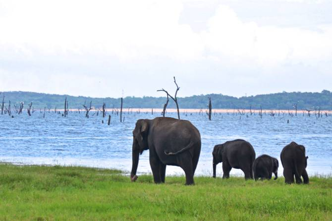 Elephants-Kaudulla-National-Park
