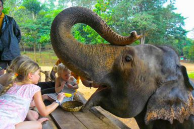Pinnawala baby elephant milk feeding