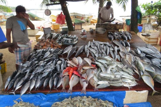 fish-market-galle