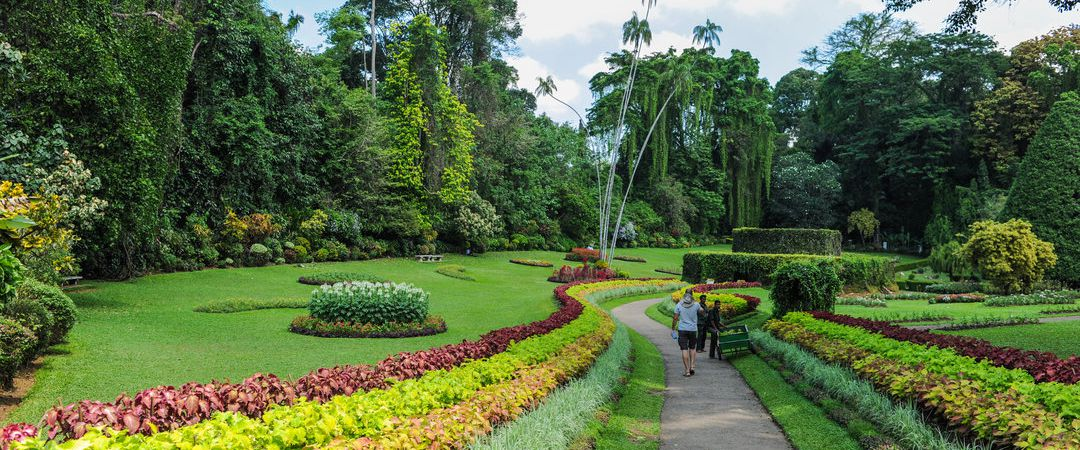 kandy-royal-botanical-garden
