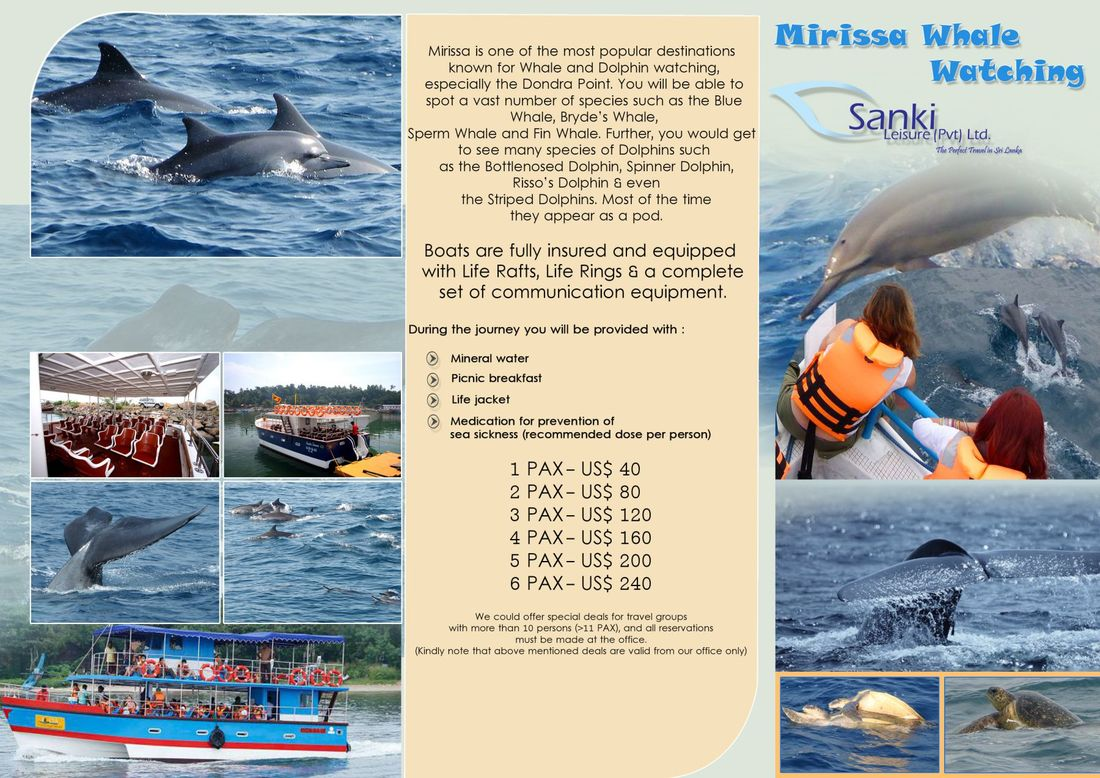 price for whale watching mirissa