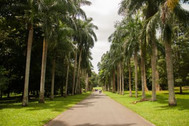 peradeniya royal botanical garden