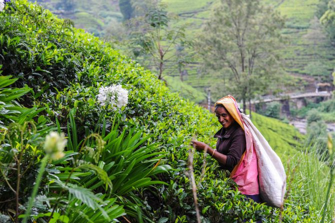 tea-estate-nuwara-eliya
